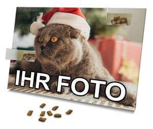 Katzen-Adventskalender mit Foto